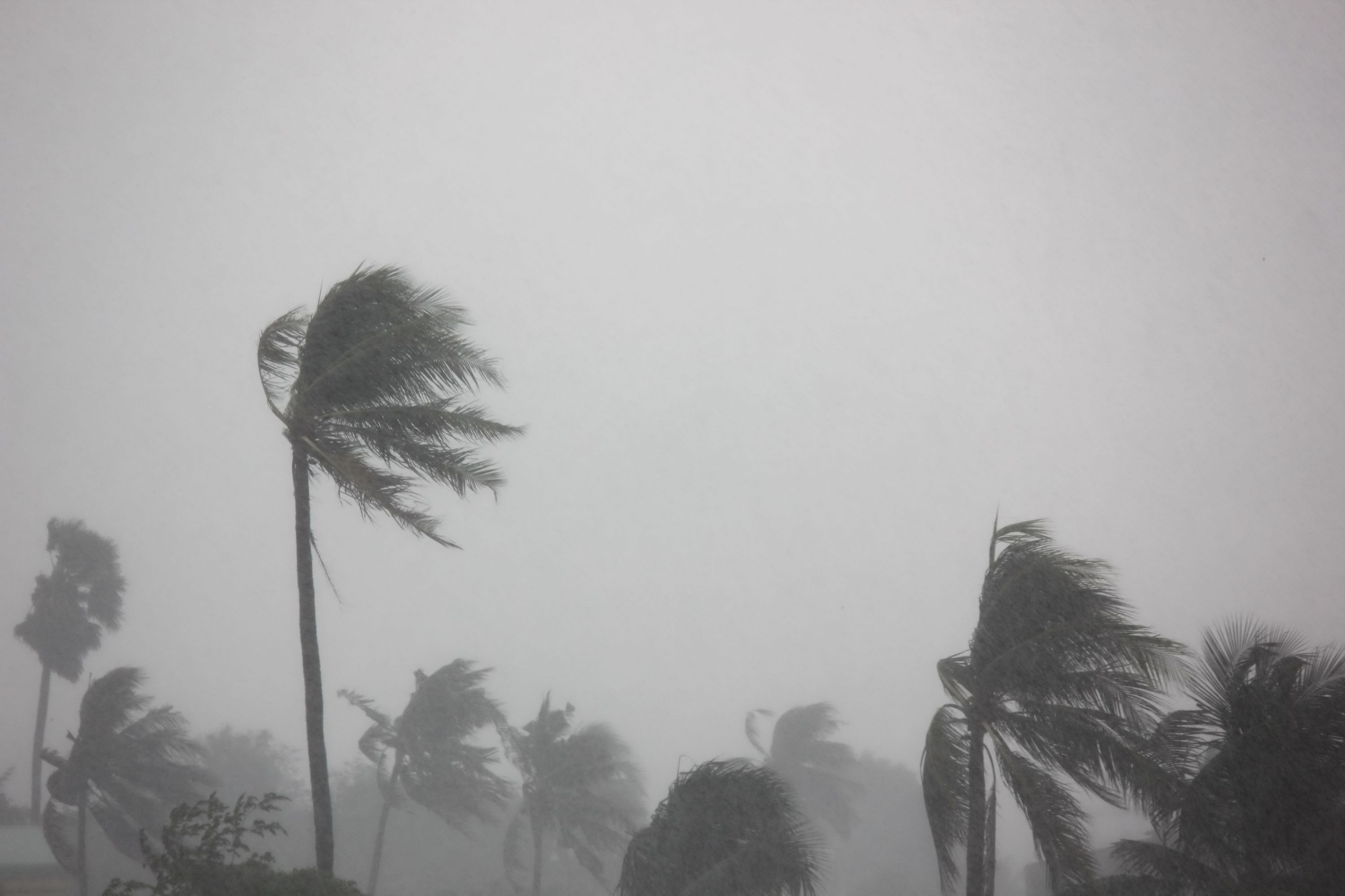 Disasters and your taxes: What you need to know